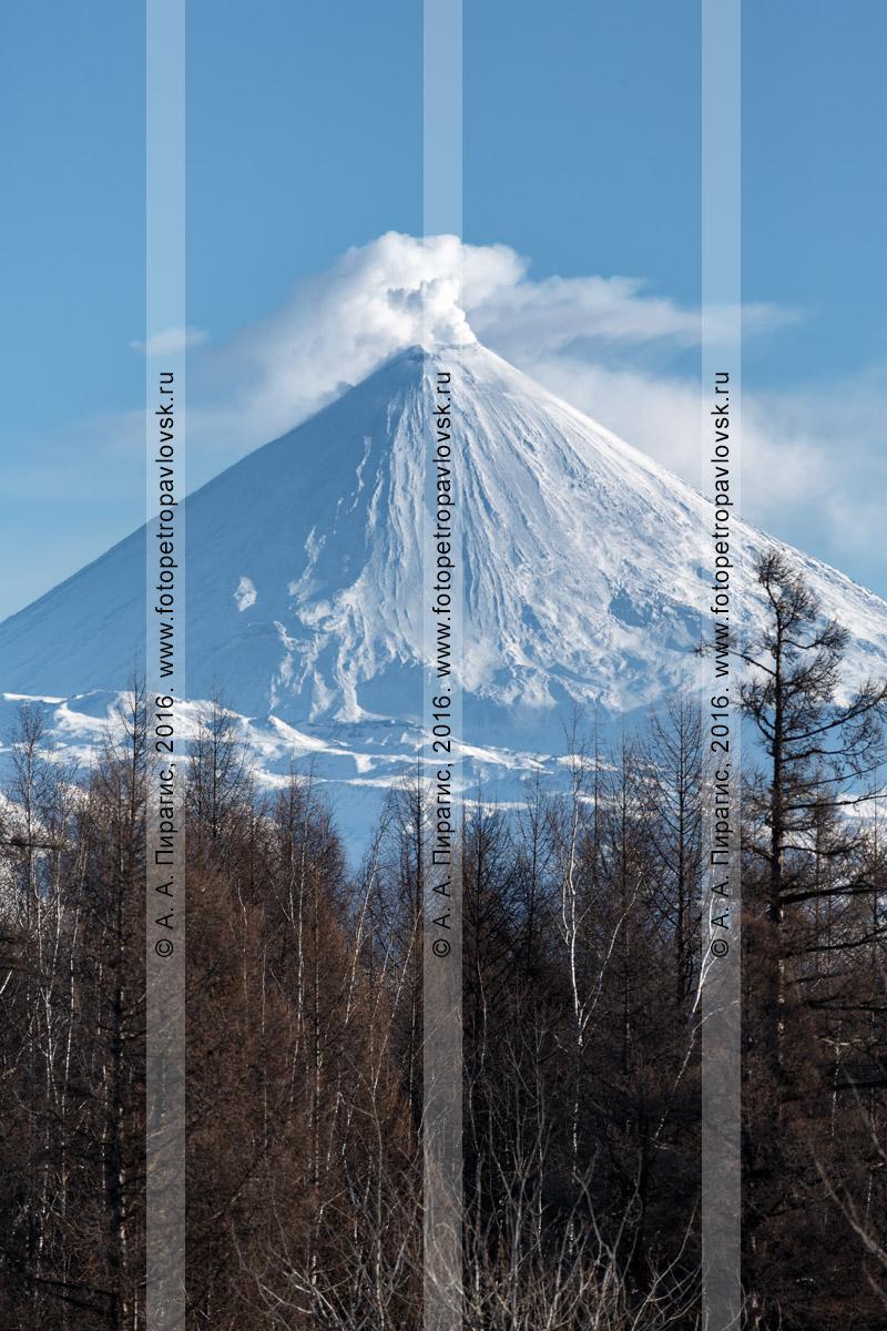"""Фотография: камчатский зимний пейзаж — действующий Ключевской вулкан. Ключевской природный парк, природный парк """"Вулканы Камчатки"""", Камчатский край"""