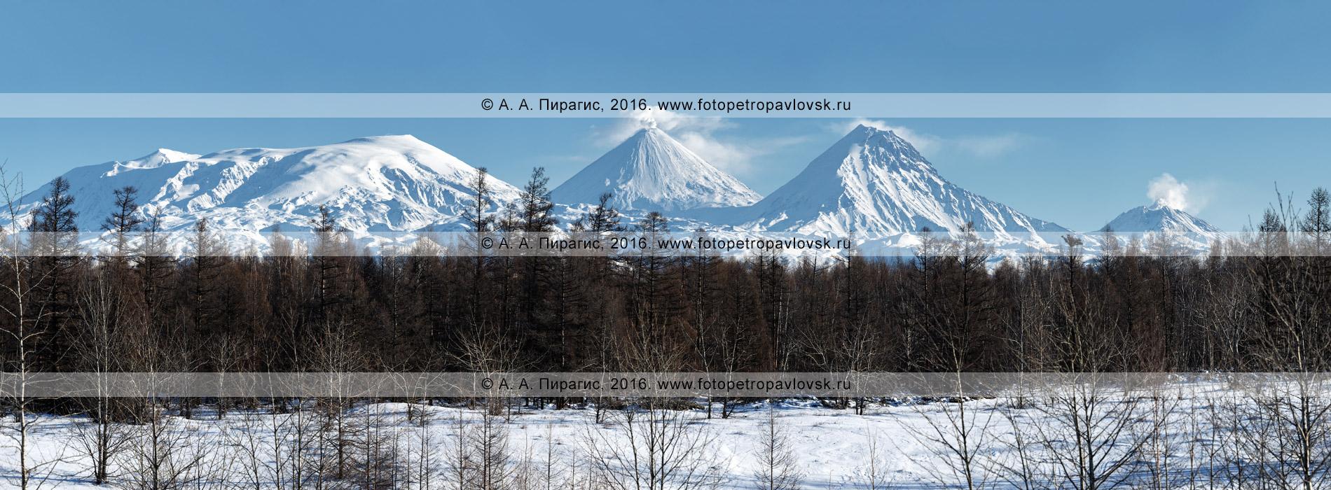 Фотография (панорама): Ключевская группа вулканов на полуострове Камчатка — вулкан Ушковский, вулкан Ключевской, вулкан Камень, вулкан Безымянный
