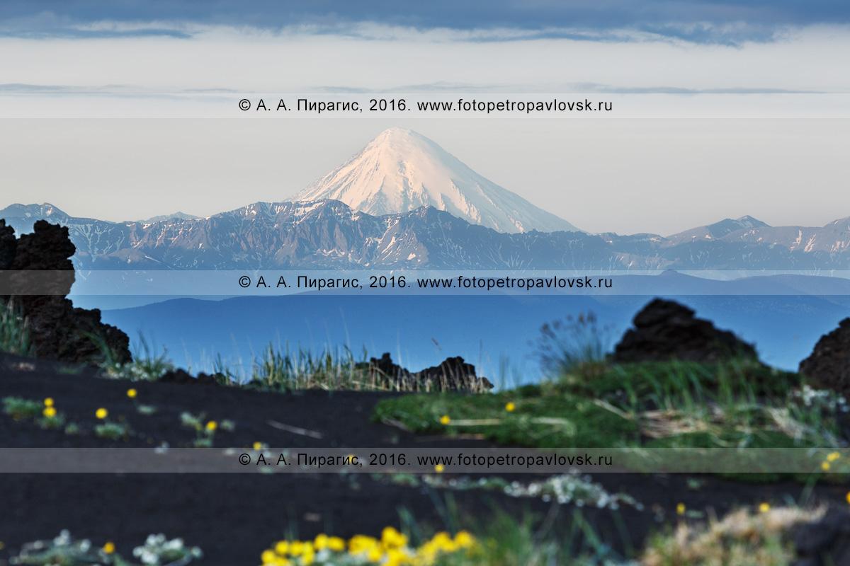 Фотография: действующий Кроноцкий вулкан на полуострове Камчатка