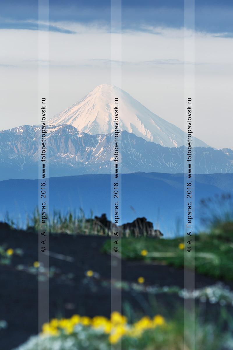 Фотография: камчатский действующий Кроноцкий вулкан на рассвете