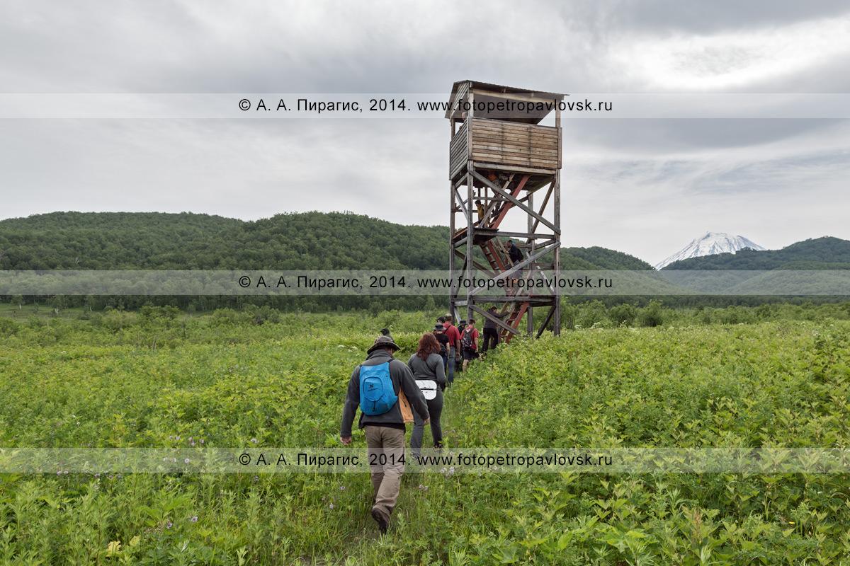 """Группа туристов и путешественников идет на смотровую вышку (наблюдательную вышку) на Центральном кордоне природного парка """"Налычево"""" на Камчатке"""
