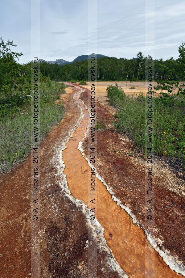 Травертиновый ручей, ручей с горячей минеральной водой, вытекающий из термального источника Грифон Иванова. Налычево, полуостров Камчатка