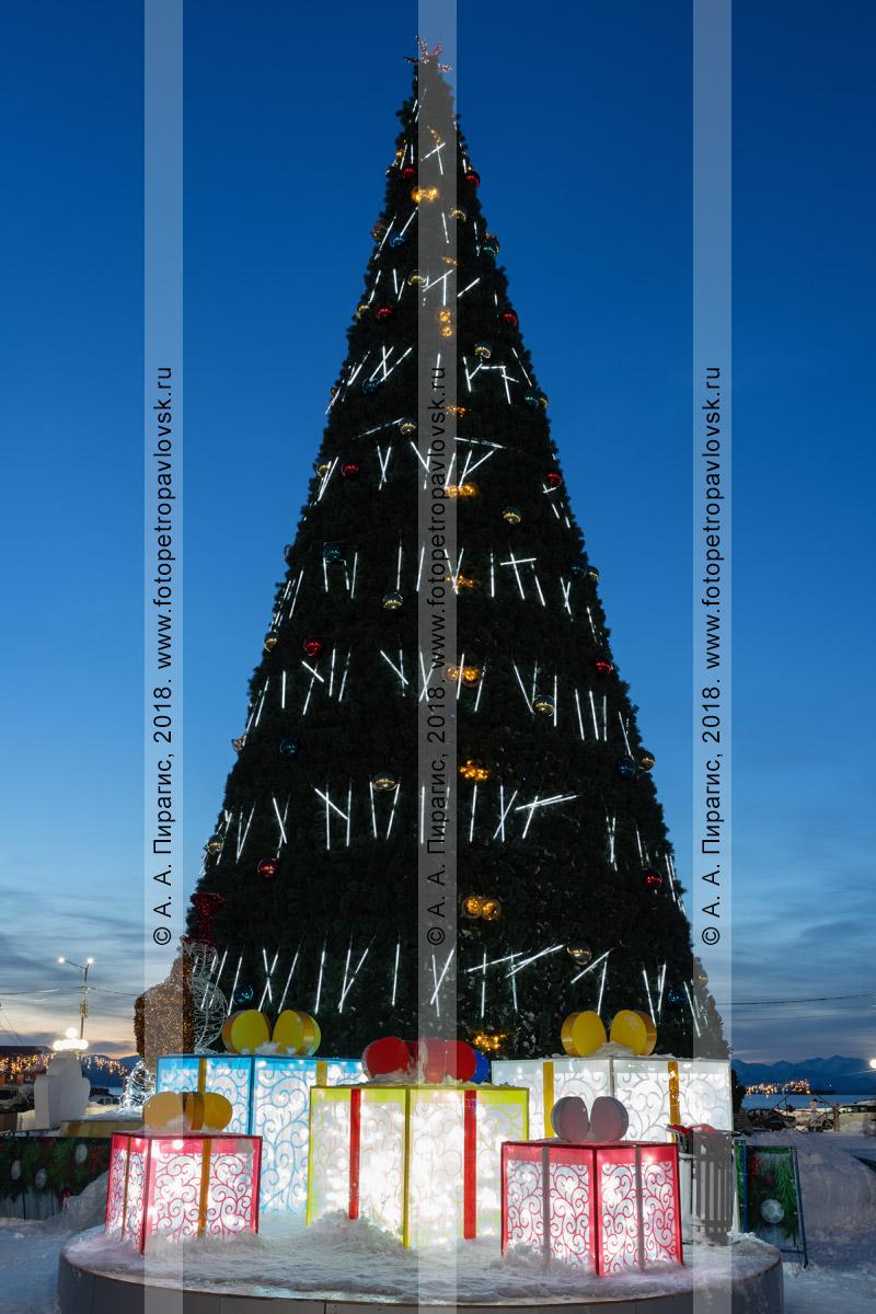 Ночная фотография: празднично украшенная святящаяся главная новогодняя елка полуострова Камчатка в центре города Петропавловска-Камчатского