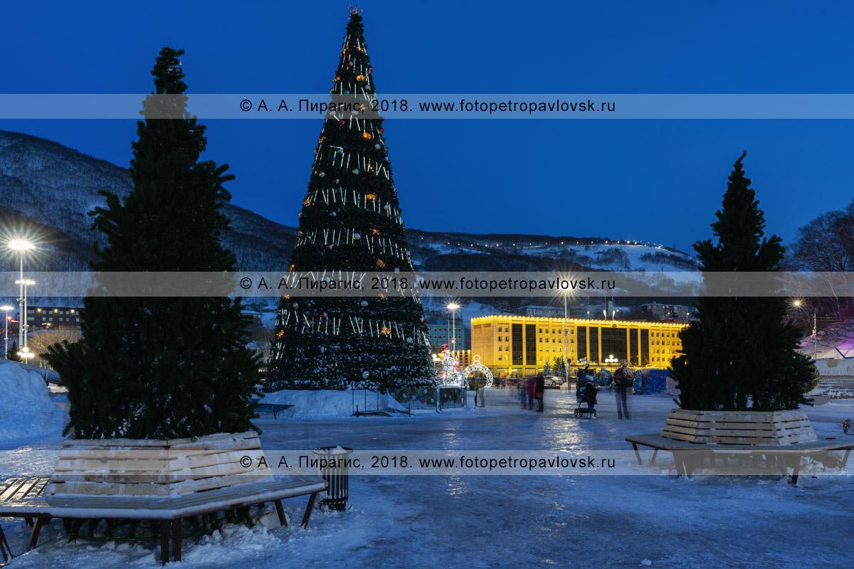 Ночная фотография: главная новогодняя елка Камчатского края в городе Петропавловске-Камчатском