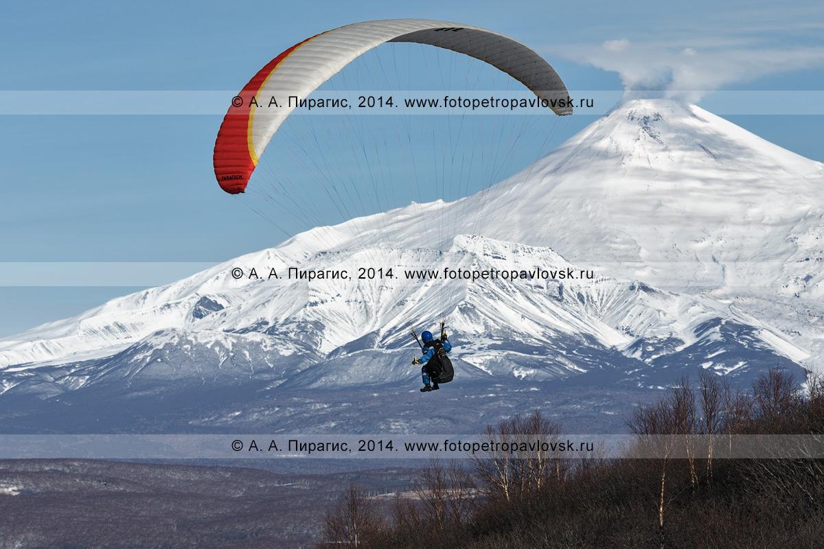 Фотография: полет на параплане на фоне Авачинского вулкана — действующего вулкана полуострова Камчатка