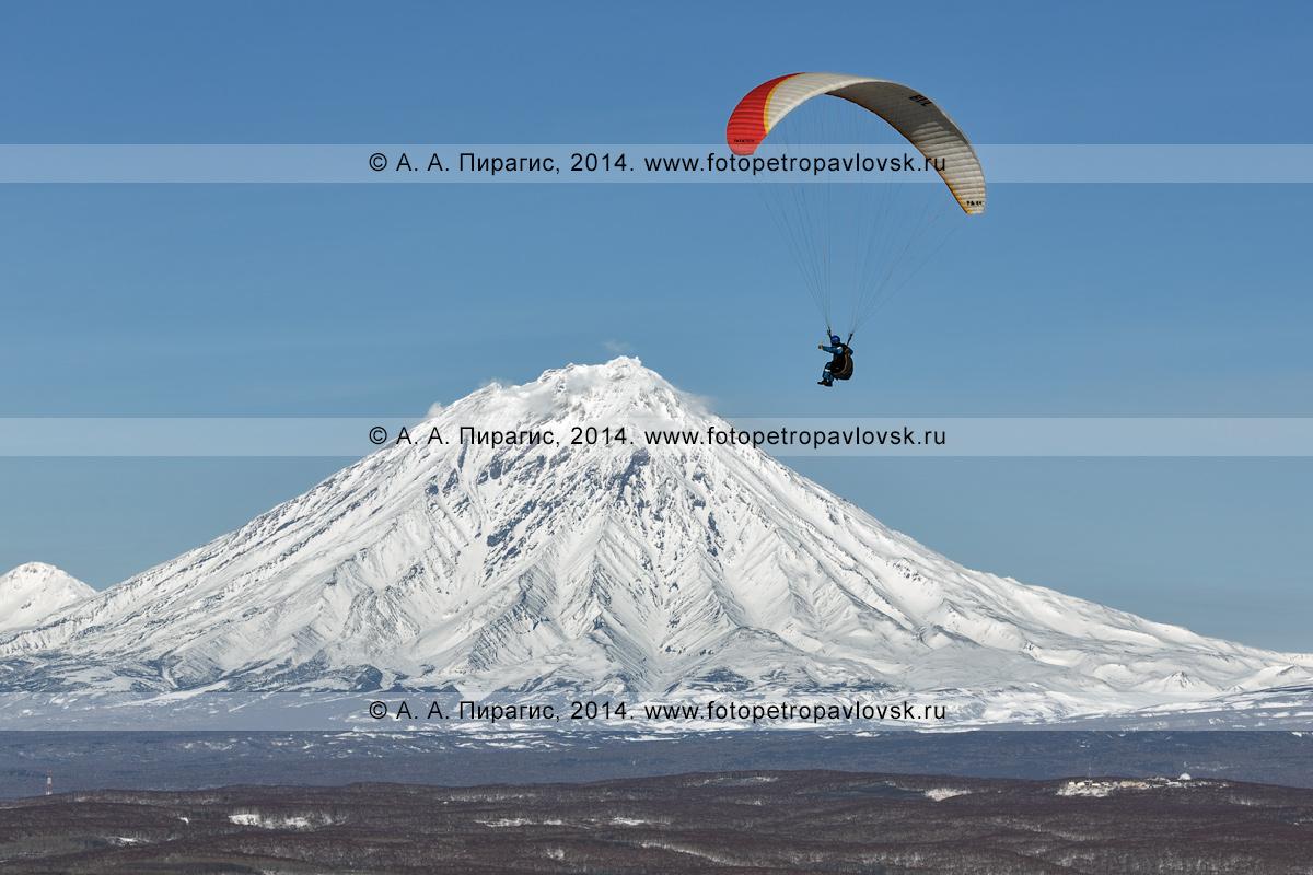 Фотография: камчатский спортсмен-парапланерист летит на параплане на фоне действующего вулкана Камчатки — вулкана Корякская сопка