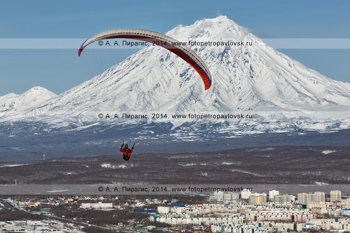 Фотография: спортсмен-парапланерист летит на параплане над столицей Камчатского края на фоне действующего Корякского вулкана