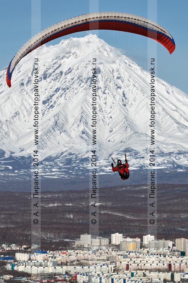 Фотография: красивый полет на параплане над Петропавловском-Камчатским на фоне Корякского вулкана. Камчатский край