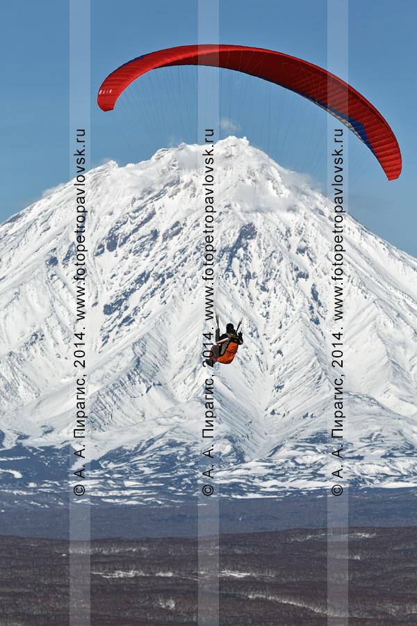 Фотография: полет параплана на фоне действующего Корякского вулкана на Камчатке