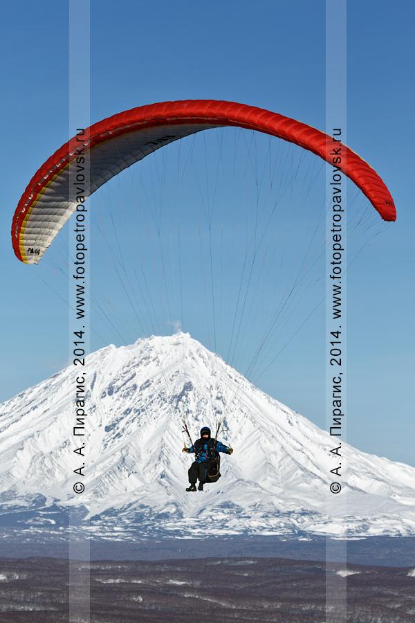 Фотография: полет на параплане на фоне вулкана Корякская сопка — действующего вулкана Камчатки