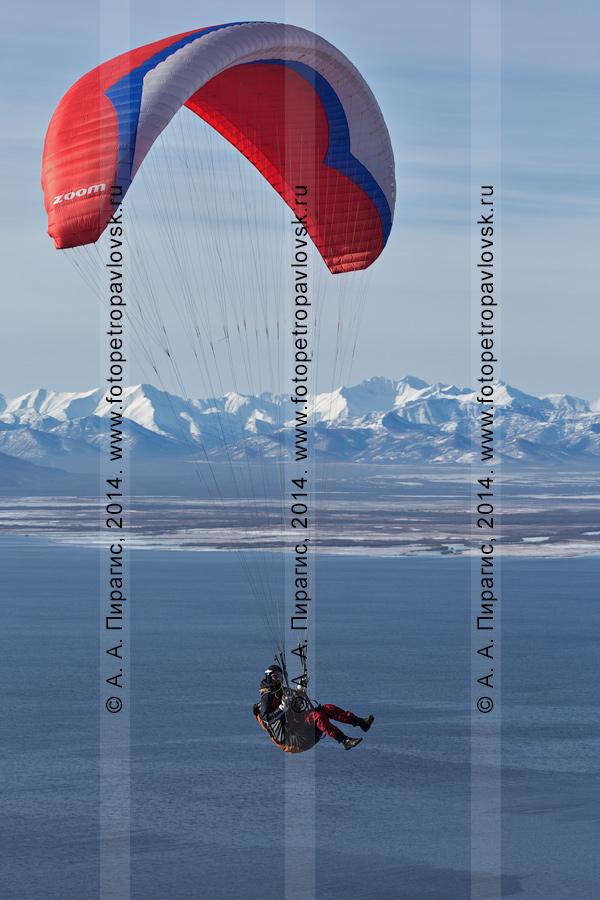 Фотография: полет на параплане на фоне Авачинской бухты (Авачинской губы) и гор Камчатки