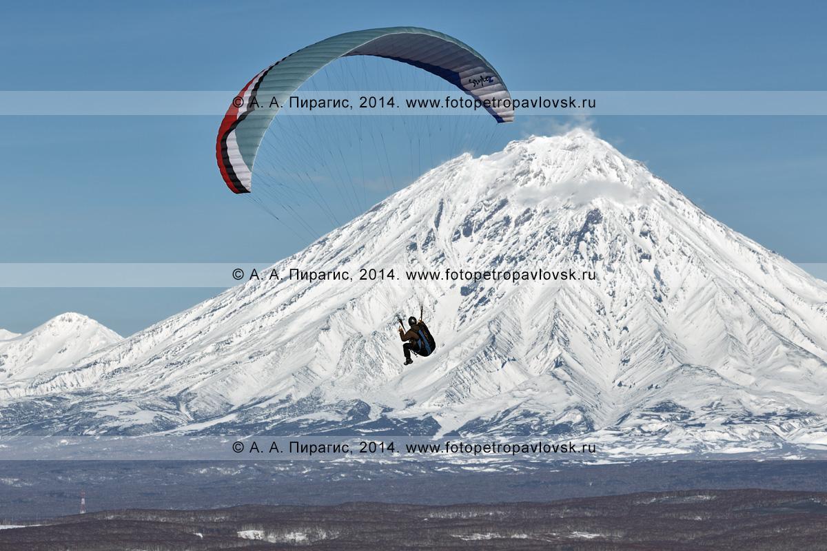 Фотография: камчатский парапланерист летит на параплане на фоне Корякского вулкана — действующего вулкана полуострова Камчатка