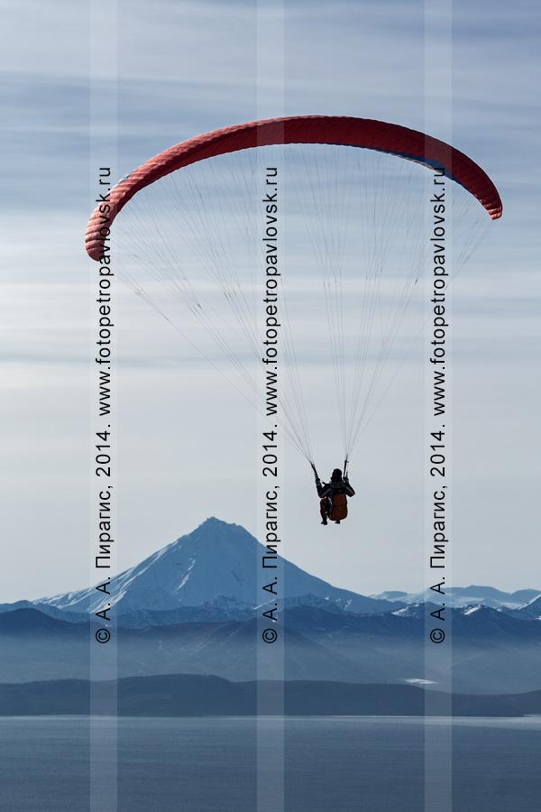 Фотография: полет на параплане над Авачинской бухтой (Авачинской губой) на фоне Вилючинского вулкана. Полуостров Камчатка