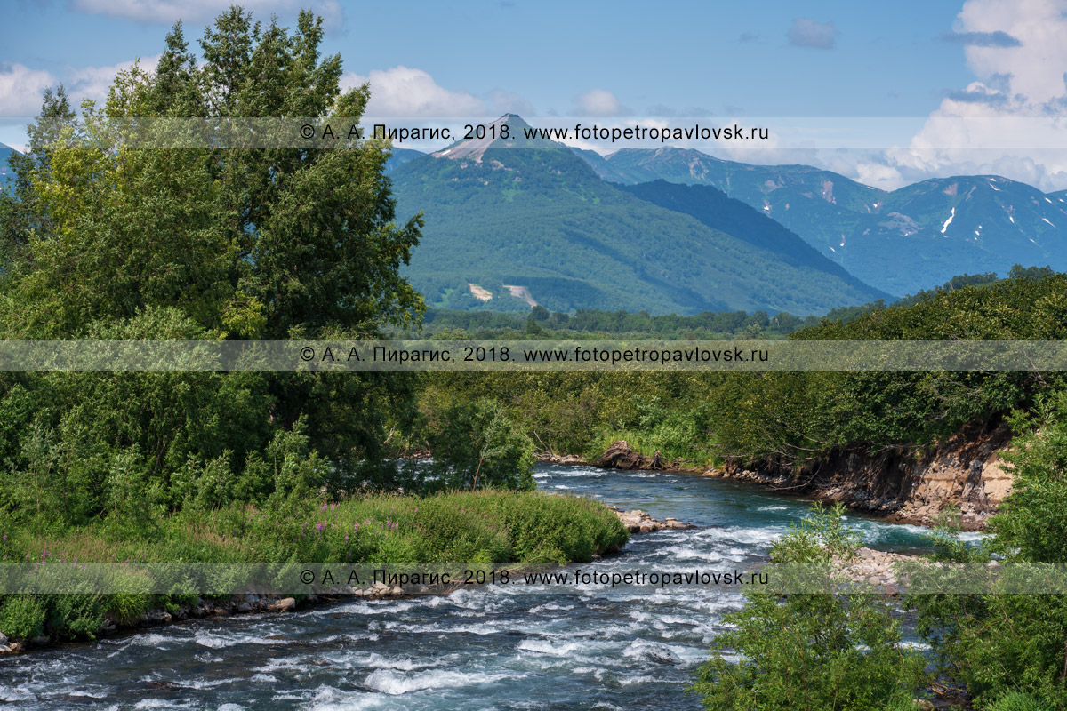 Фотография: красивый летний пейзаж полуострова Камчатка, вид на горную реку Паратунку, зеленый лес по берегам водоема в солнечную погоду