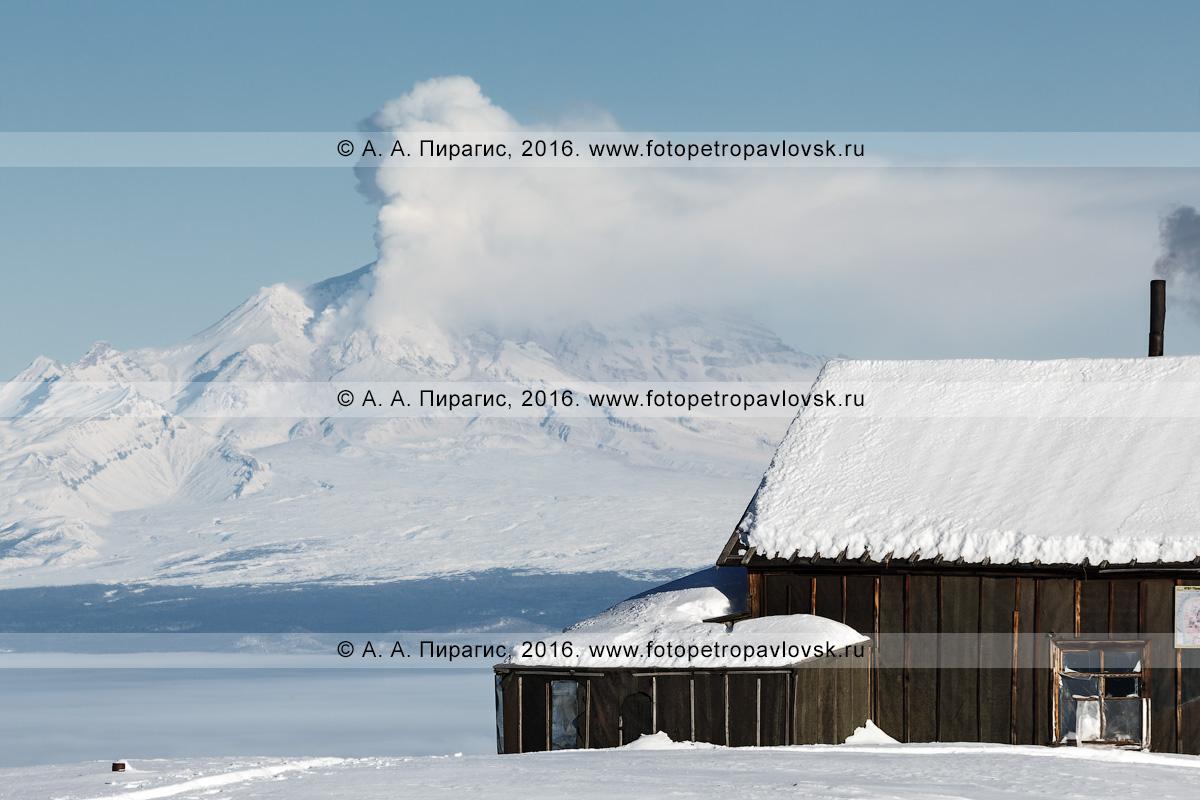 Фотография: деревянный домик вулканологов на фоне действующего вулкана Шивелуч, извергающего из кратера гигантский парогазовый столб. Полуостров Камчатка, Центральная Камчатская депрессия