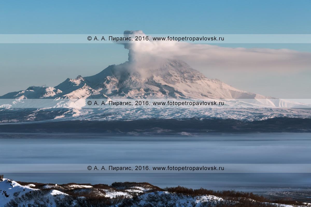 Фотография: вид на действующий вулкан Шивелуч (Shiveluch Volcano). Камчатский край, Усть-Камчатский район