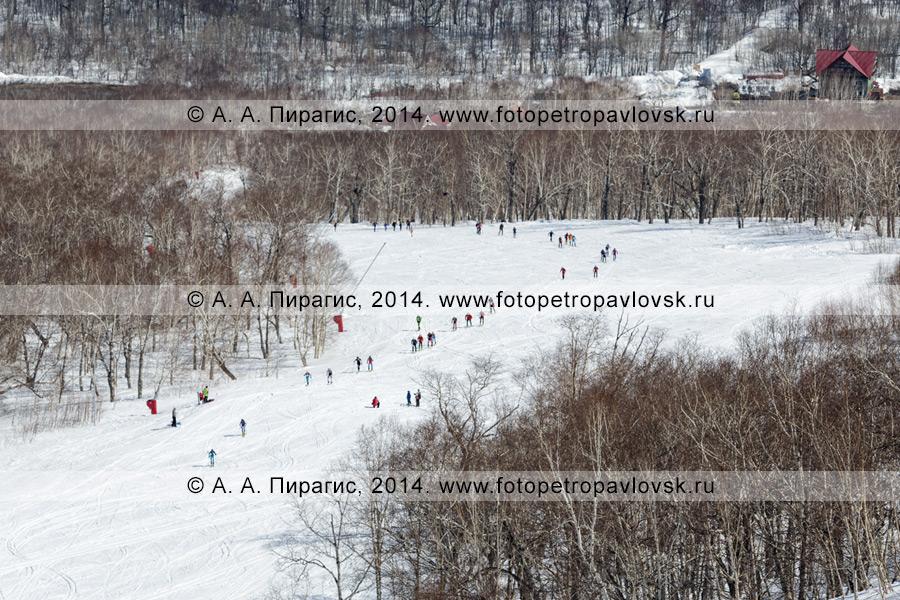Фотография: ски-альпинисты поднимаются на гору Морозную, вид сверху на цепочку спортсменов. Соревнования по ски-альпинизму — вертикальная гонка. Полуостров Камчатка, гора Морозная