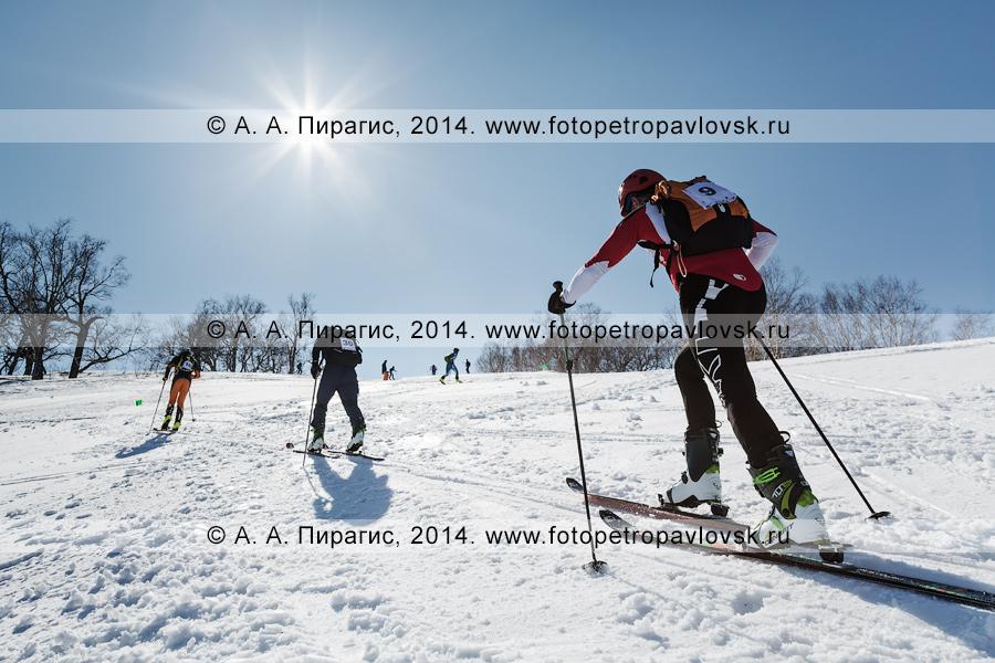 Фотография: ски-альпинисты поднимаются на вершину горы Морозной. Соревнования по ски-альпинизму — вертикальная гонка. Полуостров Камчатка, гора Морозная