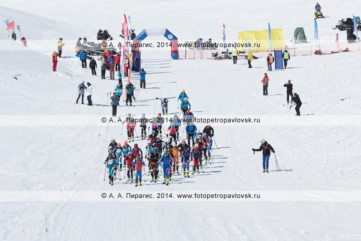 Фотография: старт соревнований по ски-альпинизму (индивидуальная гонка), ски-альпинисты бегут на лыжах с пристегнутым камусом. Камчатка, Авачинский вулкан