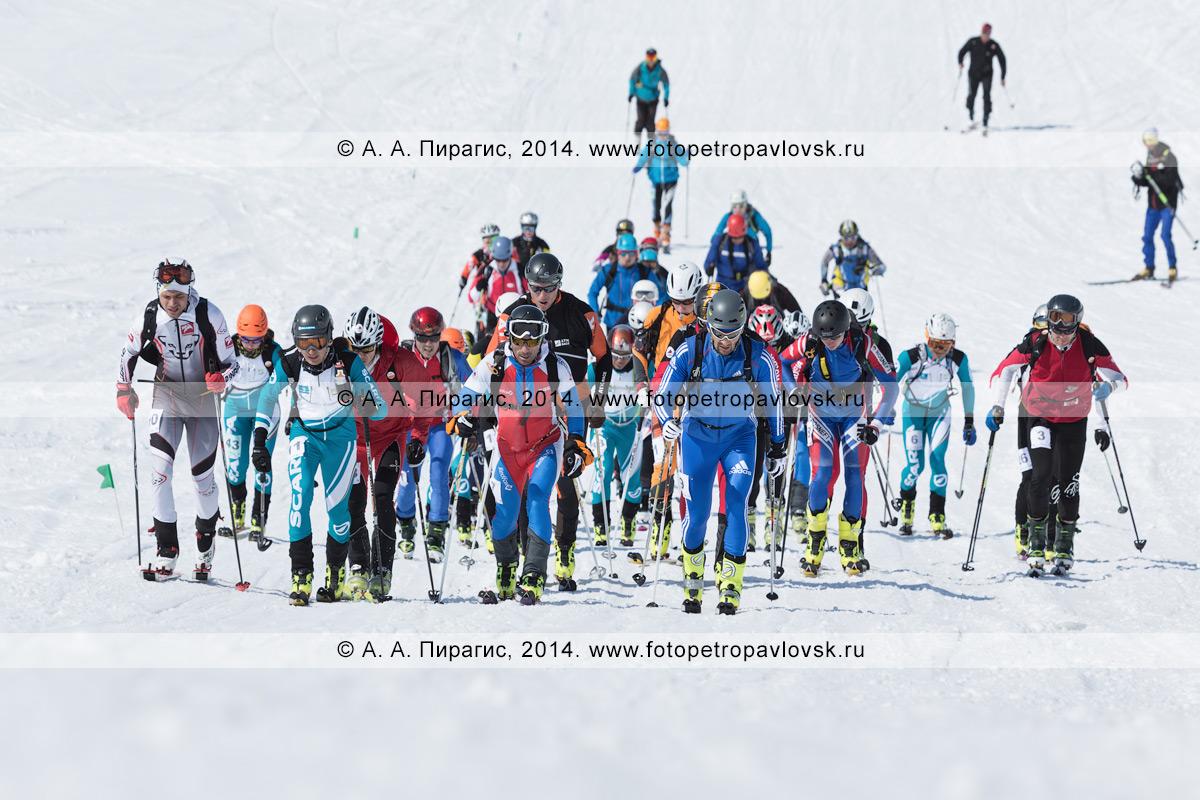 Фотография: ски-альпинисты поднимаются на лыжах с пристегнутым камусом на вулкан. Соревнования по ски-альпинизму — индивидуальная гонка. Камчатка, Авачинский вулкан