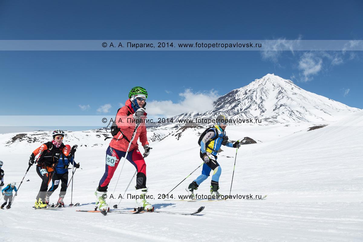 Фотография: группа ски-альпинистов поднимается на лыжах с пристегнутым камусом на Авачинский вулкан на фоне Корякского вулкана. Соревнования по ски-альпинизму — индивидуальная гонка. Камчатка