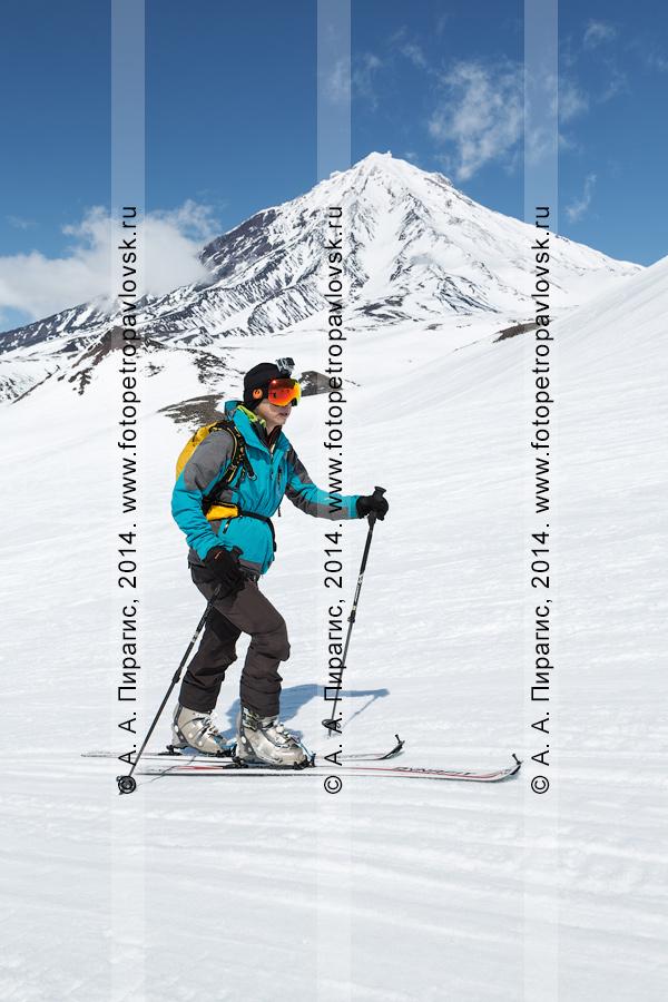 Фотография: ски-альпинист (зритель) поднимается на лыжах с пристегнутым камусом на Авачинский вулкан на фоне Корякского вулкана. Соревнования по ски-альпинизму — индивидуальная гонка. Полуостров Камчатка