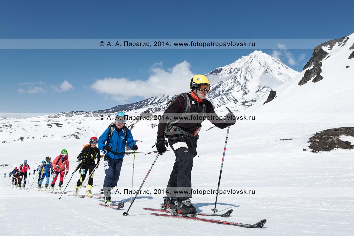 Фотография: спортсмены — участники соревнований по ски-альпинизму (индивидуальная гонка) поднимаются на лыжах с пристегнутым камусом на Авачинский вулкан на фоне Корякского вулкана (полуостров Камчатка)