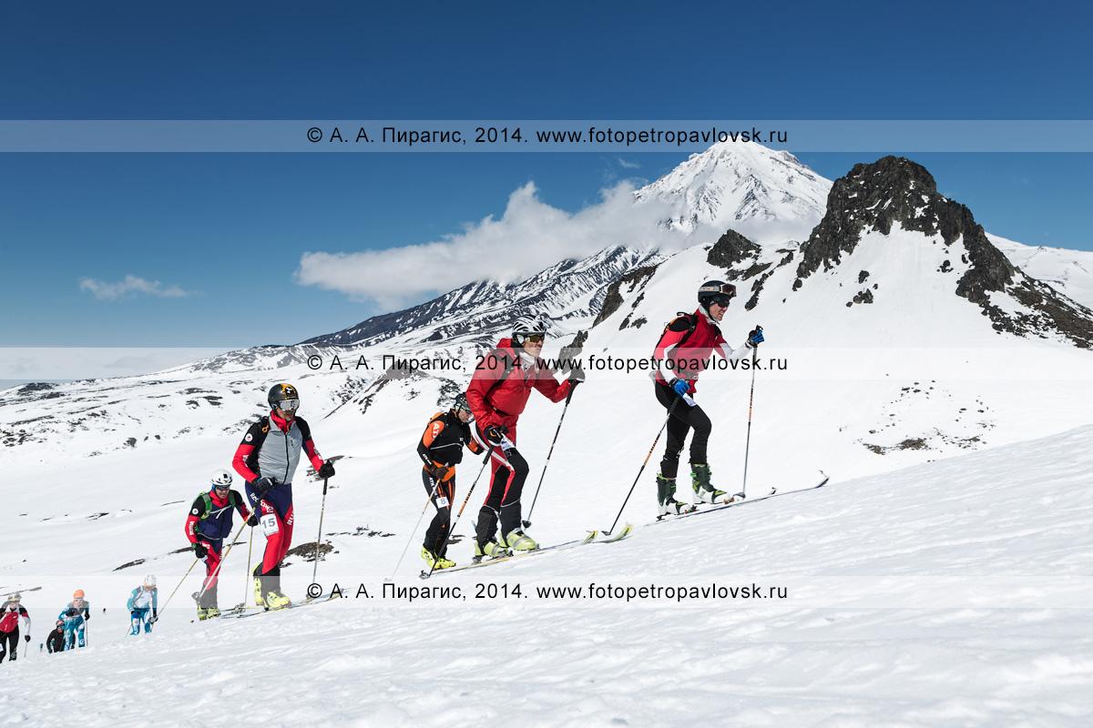 Фотография: группа ски-альпинистов идет на лыжах с пристегнутым камусом на вулкан Авачинский на фоне вулкана Корякский. Соревнования по ски-альпинизму — индивидуальная гонка. Полуостров Камчатка