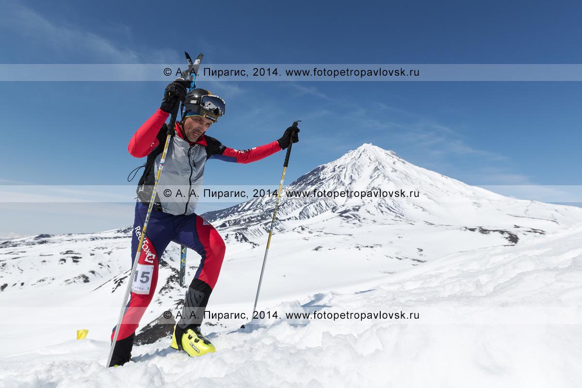 Фотография: ски-альпинист Курчаков Вячеслав идет пешком (с лыжами, пристегнутыми к рюкзаку) на Авачинский вулкан на фоне Корякского вулкана. Соревнования по ски-альпинизму — индивидуальная гонка. Камчатский край