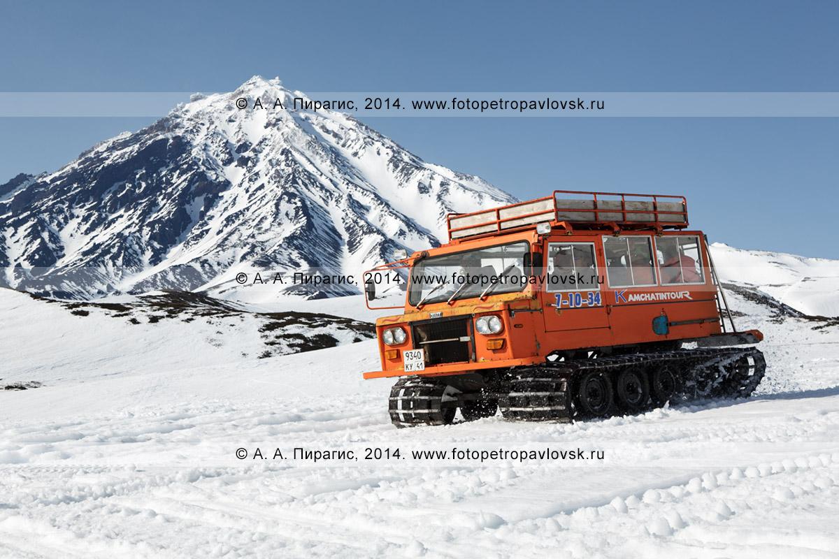 Фотография: пассажирский ратрак везет горнолыжников и сноубордистов на фоне вулкана Корякская сопка на Камчатке