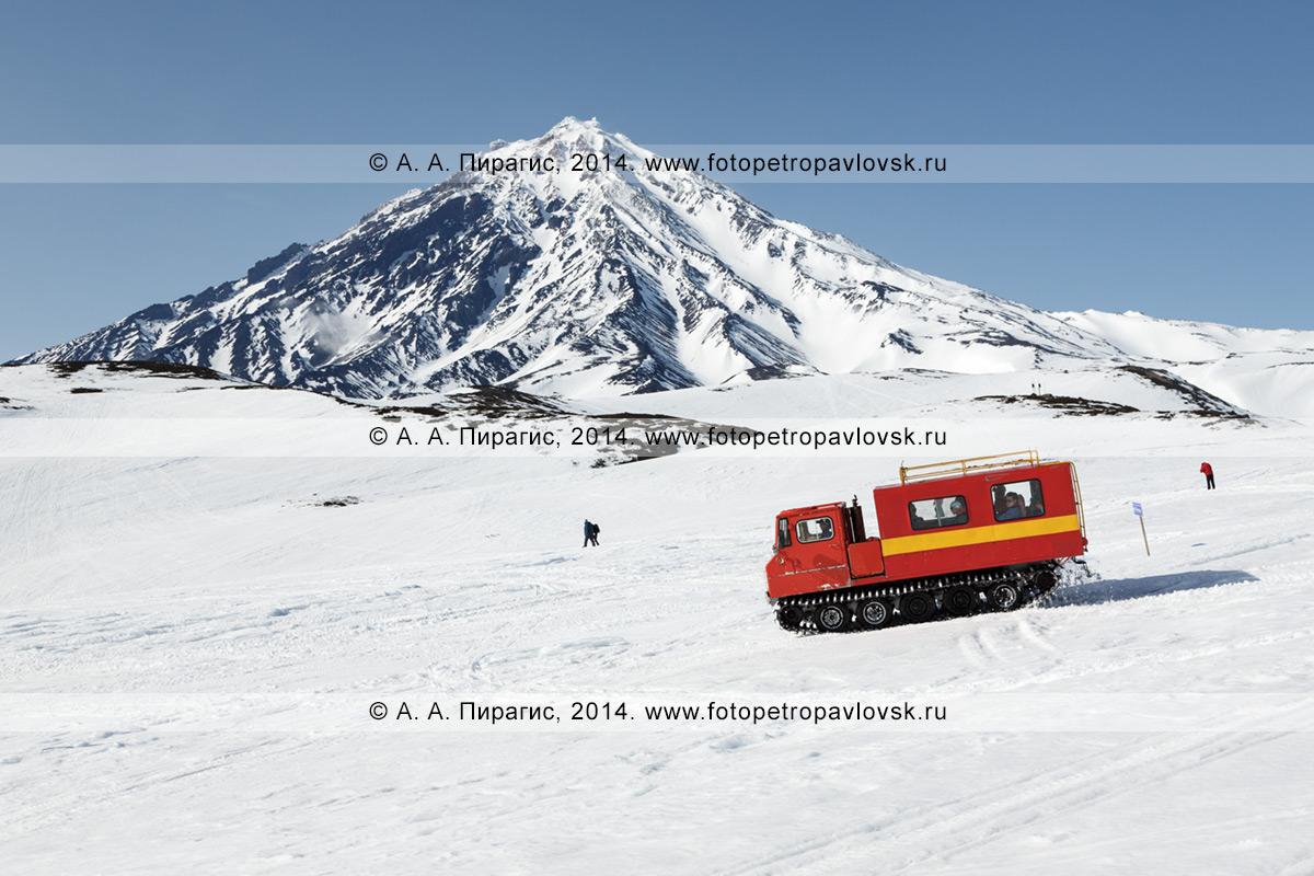 Фотография: ратрак для перевозки пассажиров едет со сноубордистами и горнолыжниками на фоне стратовулкана Корякская сопка на полуострове Камчатка