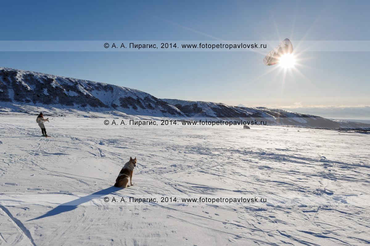 Фотография: зимний кайтинг (сноукайтинг, snowkiting) в Камчатском крае