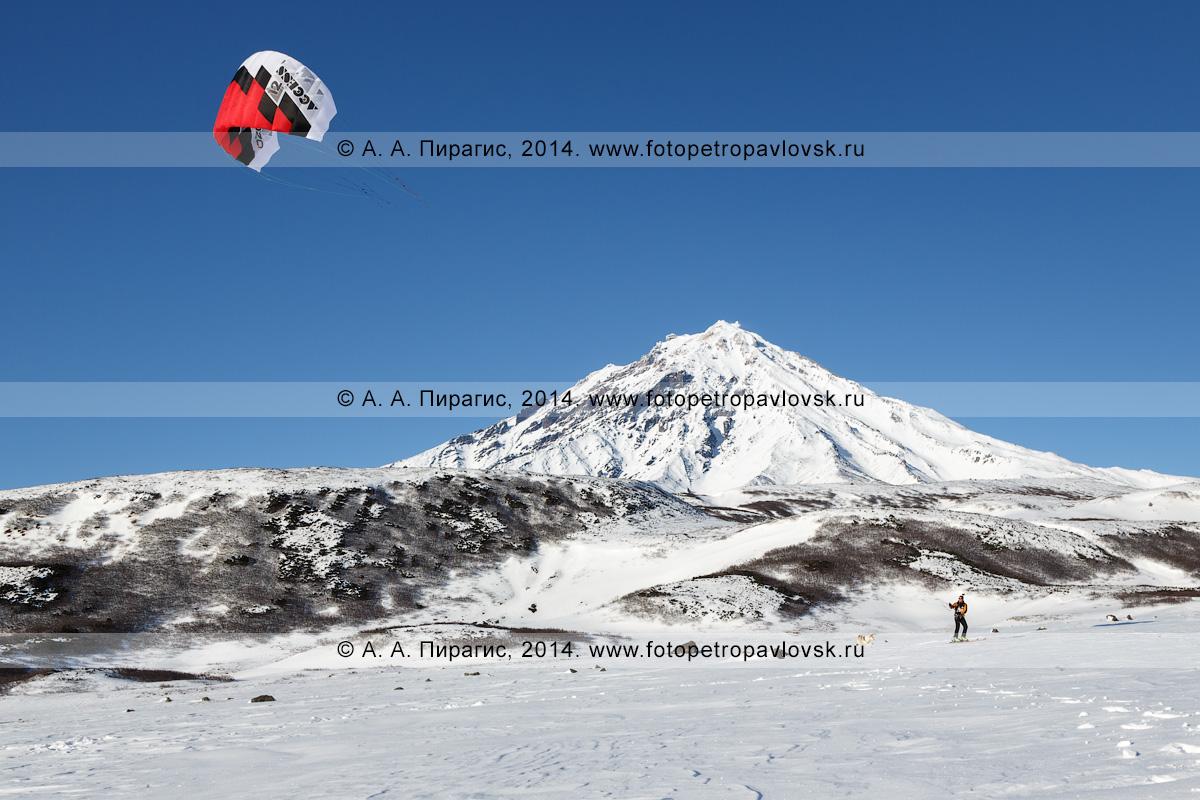 Фотография: сноукайтинг (зимний кайтинг, snowkiting) на полуострове Камчатка, катание на фоне Корякского вулкана