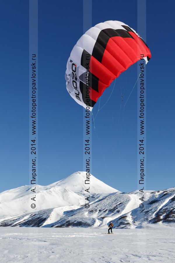 Фотография: Камчатский сноукайтинг (зимний кайтинг, snowkiting), катание на фоне вулкана Авачинская сопка. Полуостров Камчатка