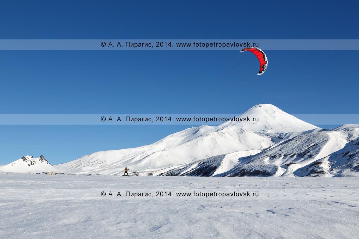 Фотография: сноукайтинг (зимний кайтинг, snowkiting) на фоне вулкана Авачинская сопка. Камчатка