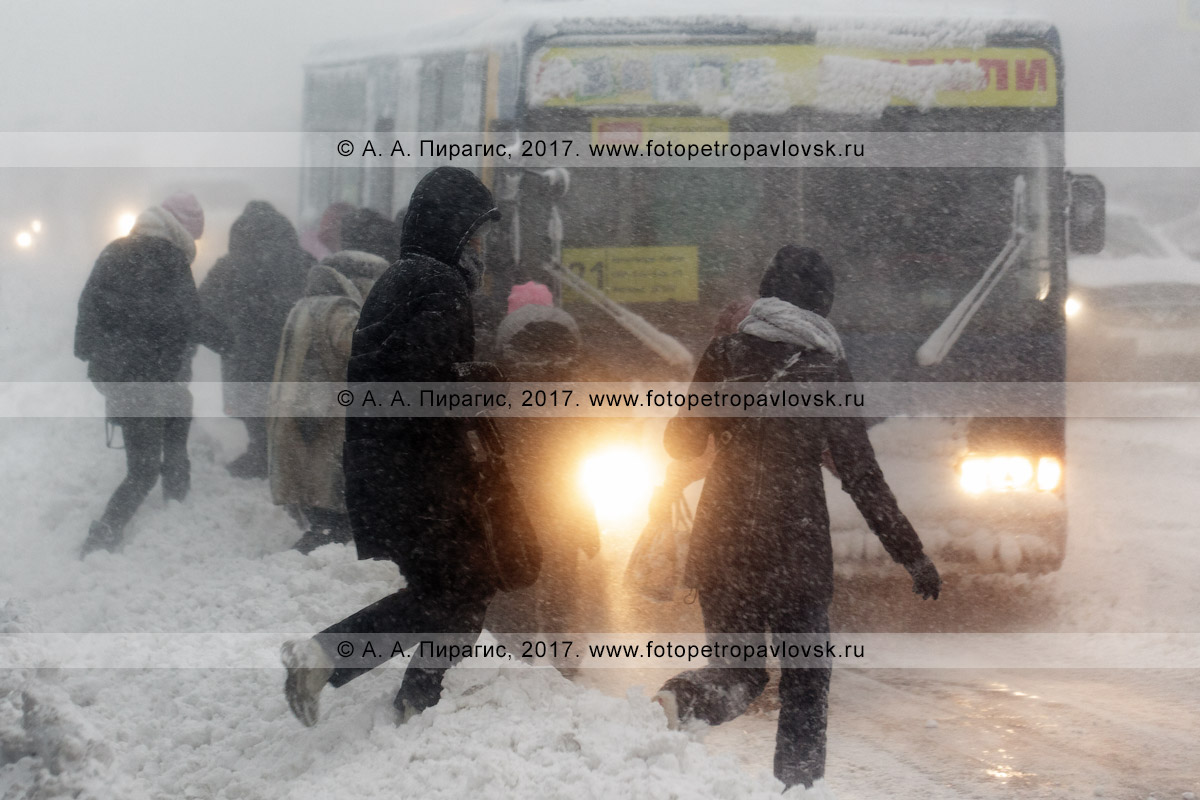Фотография: зимняя непогода в городе Петропавловске-Камчатском, пассажиры бегут к подъехавшему на остановку городского общественного транспорта автобусу маршрута №21 во время снежного циклона (пурги, метели)