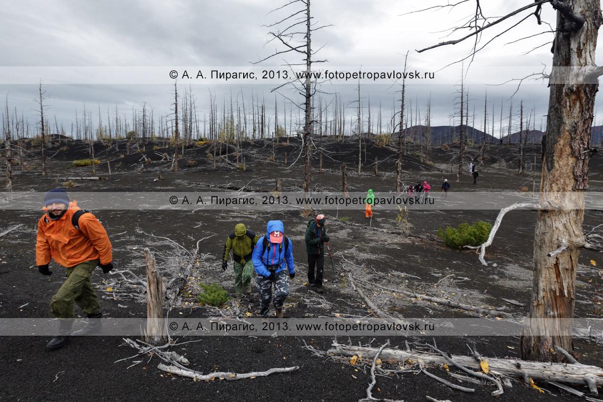Фотография: пеший туризм на полуострове Камчатка — группа туристов и путешественников гуляет в Мертвом лесу на Толбачинском долу