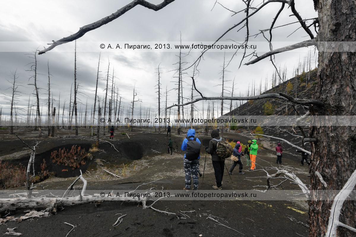 Фотография: пеший туризм в Камчатском крае — туристы прогуливаются среди обожженных лиственниц в Мертвом лесу на Толбачинском долу