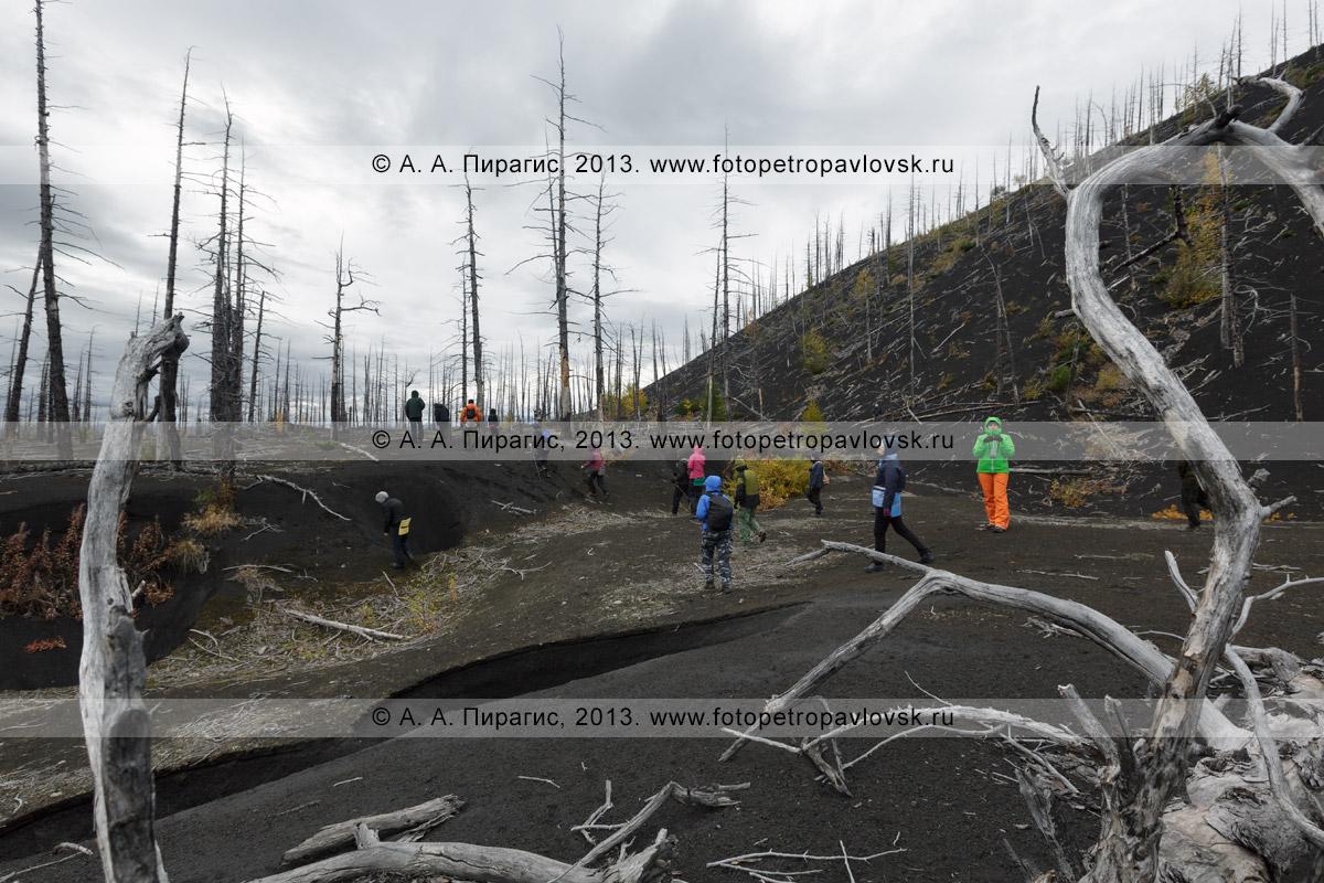 Фотография: трекинг по Камчатке — туристы и путешественники прогуливаются по драматическому Мертвому лесу на Толбачинском долу