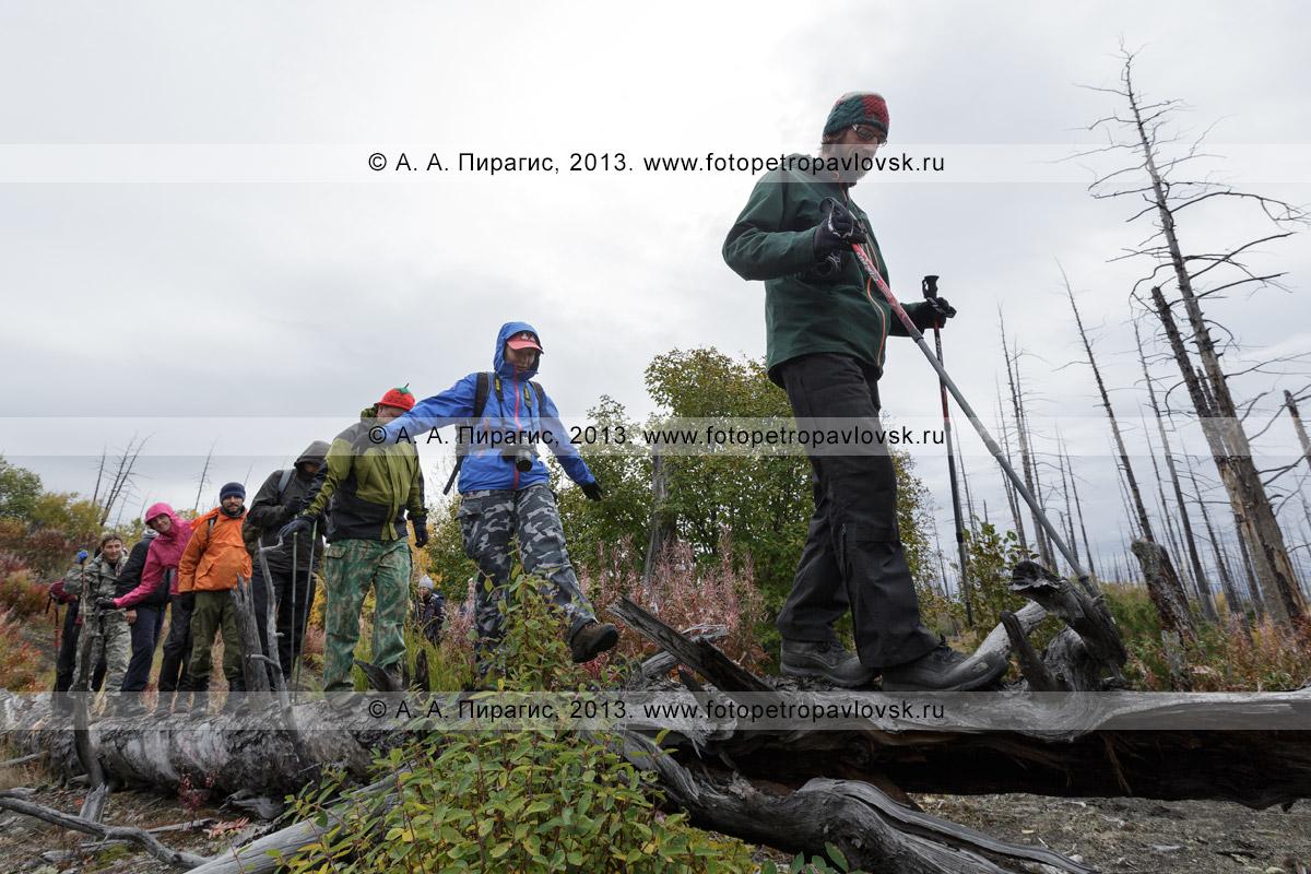 Фотография: туризм в Камчатском крае — организованная туристическая группа совершает пешую экскурсию по Мертвому лесу на Толбачинском долу