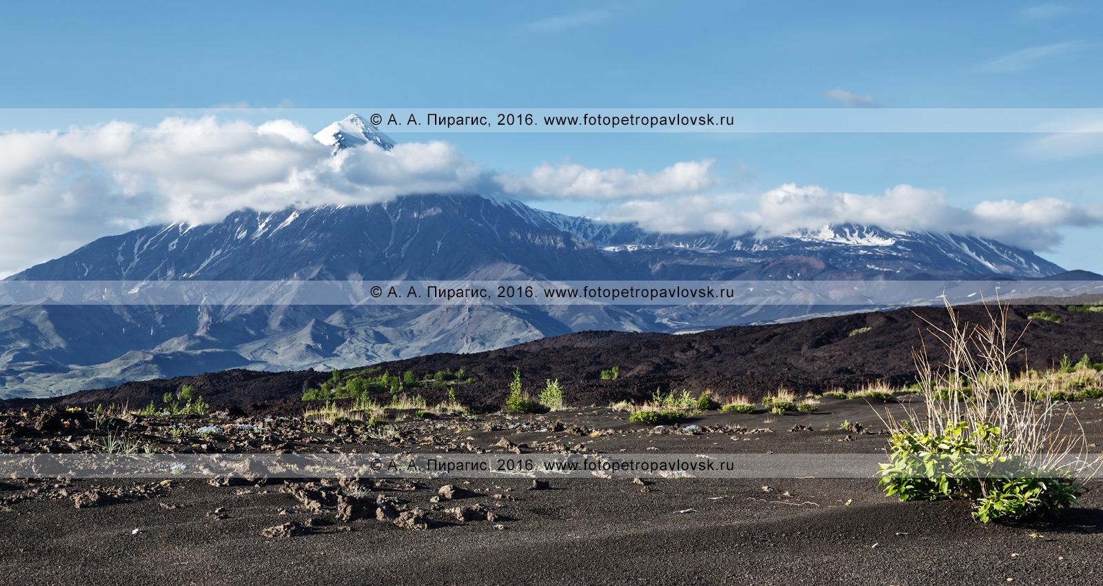 Фотография: панорамный вид на Толбачинский вулканический массив — вулкан Острый Толбачик и вулкан Плоский Толбачик. Камчатка, Ключевская группа вулканов