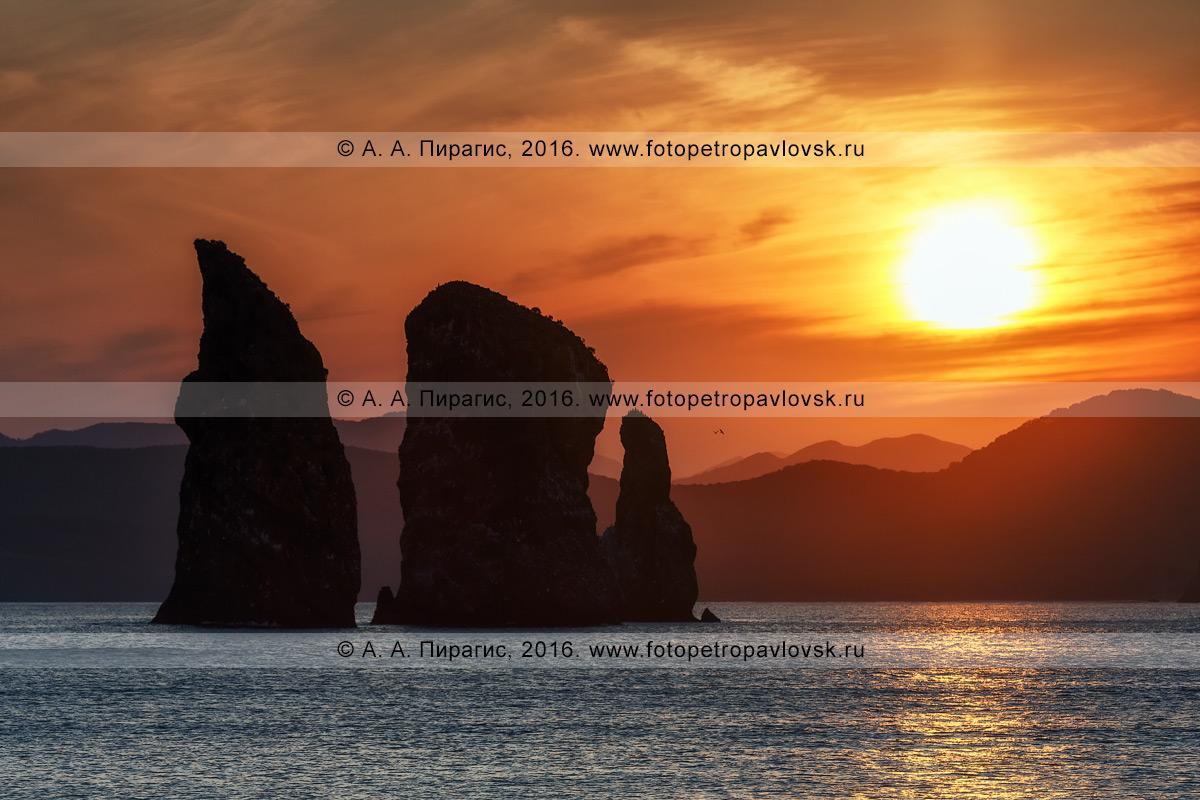Фотография: живописный вид на скалы Три Брата в Авачинской бухте на закате солнца. Камчатка