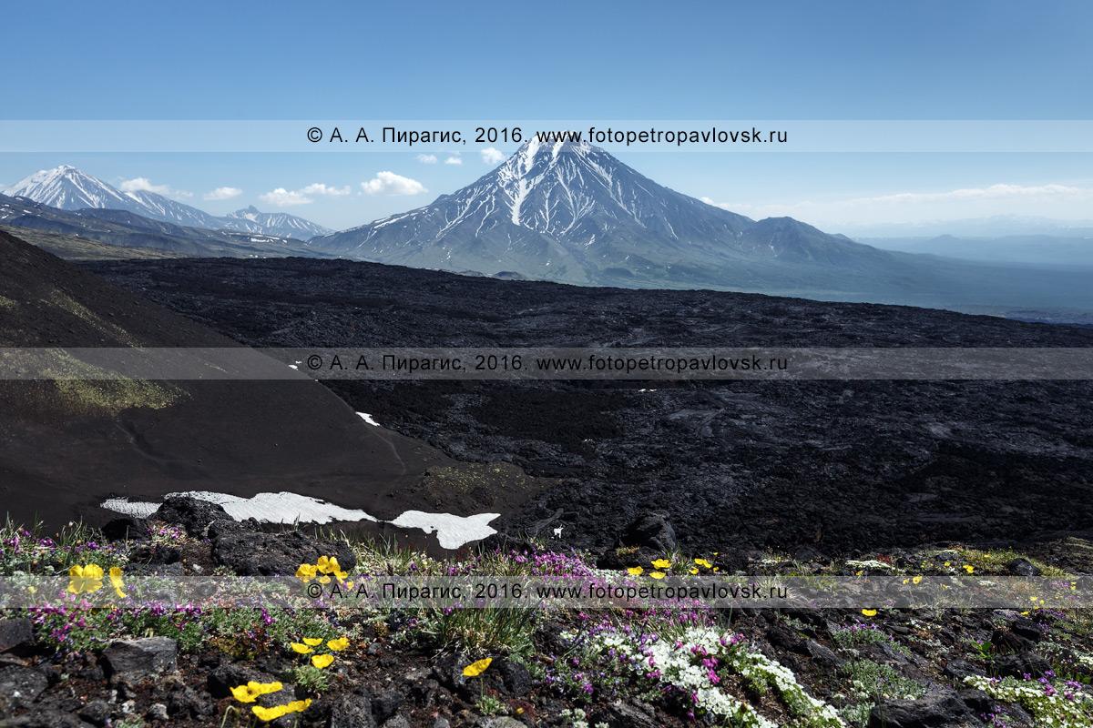 Фотография: вулканический пейзаж Камчатки — стратовулкан Большая Удина (Bolshaya Udina Volcano) в Ключевской группе вулканов. Камчатский край
