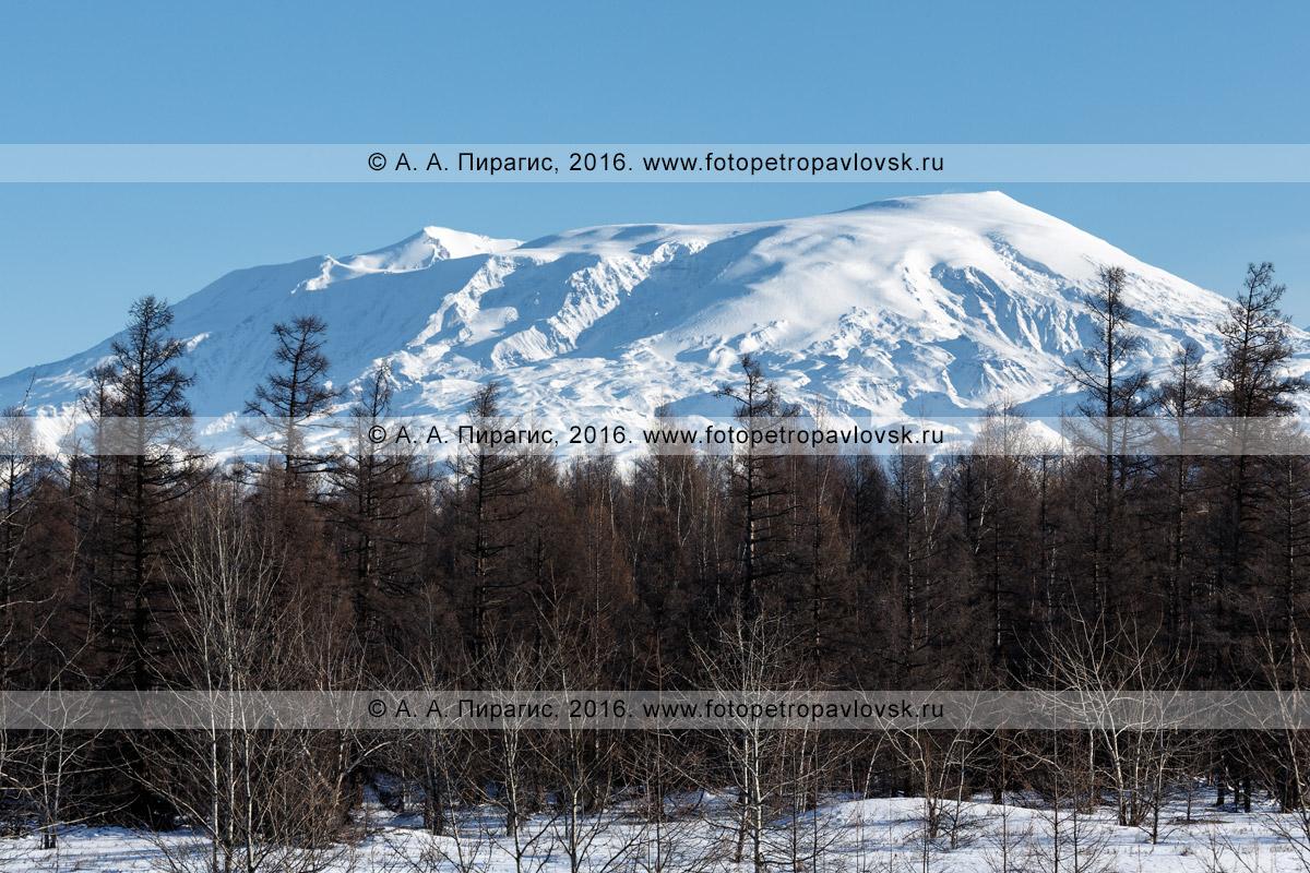 Фотография: камчатский зимний пейзаж — вулкан Ушковский. Ключевская группа вулканов, полуостров Камчатка