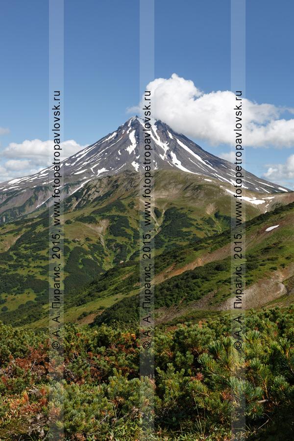 Фотография: живописный камчатский ландшафт — вид на вулкан Вилючинская сопка (Vilyuchinsky Volcano) с Вилючинского перевала. Камчатский край