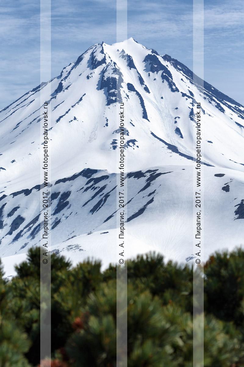 Фотография: вид на конус стратовулкана Вилючинская сопка с Вилючинского перевала. Полуостров Камчатка