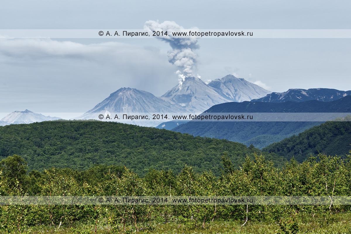 Фотография: эксплозивное извержение вулкана Жупановская сопка (Жупановский вулкан). Полуостров Камчатка, Налычевская долина
