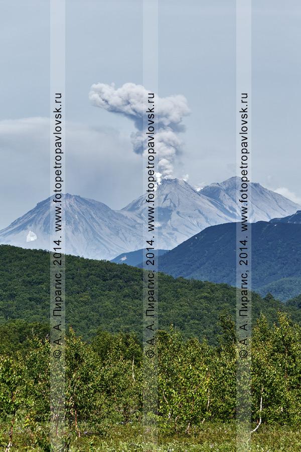 Фотография: извержение вулкана Жупановская сопка (Жупановский вулкан). Камчатка, Налычевская долина
