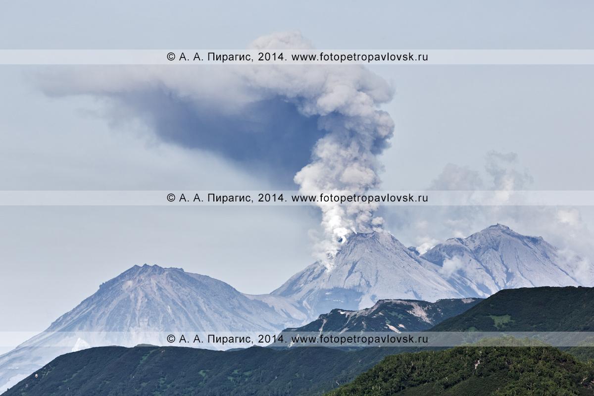 Фотография: извержение вулкана Жупановская сопка (Жупановский вулкан). Полуостров Камчатка, Налычево, Дзензур-Жупановская группа вулканов