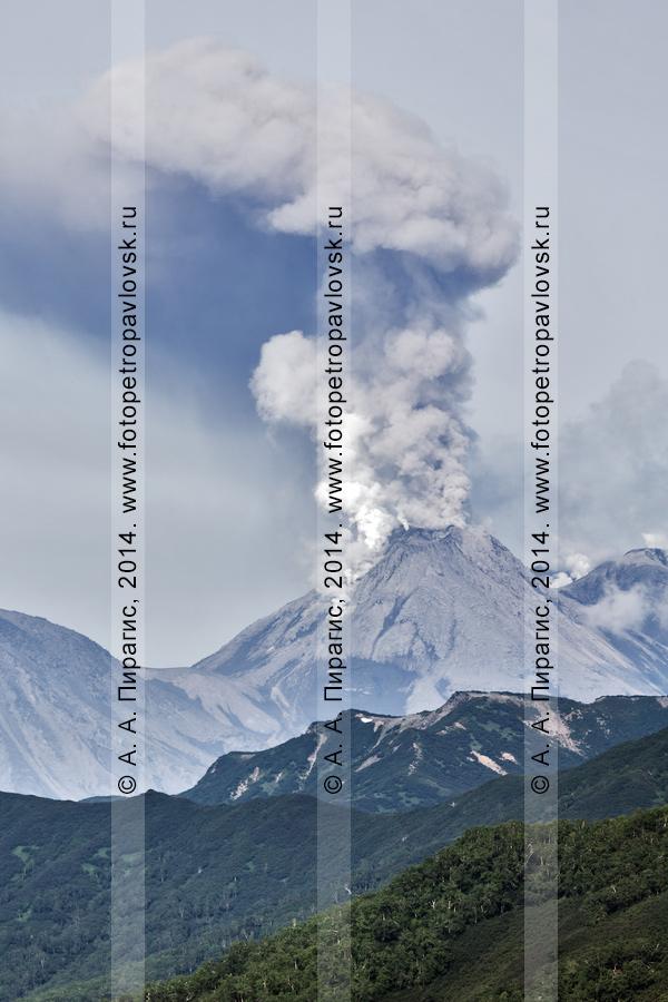 Фотография: шикарный вид на извержение Жупановского вулкана (Zhupanovsky Volcano) на Камчатке
